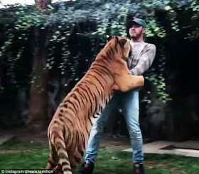 Lewis Hamilton celebrates race win by frolicking with big tiger in Mexico